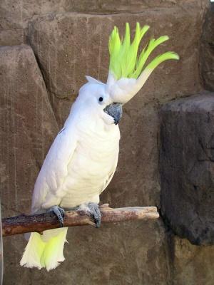 Bild    Söt Kakadua fågel tillgängligt
